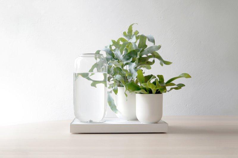 Planten Op Kantoor : Kantoordisruptie deze planten hoef je bijna nooit water te