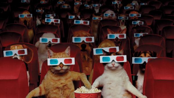 vermijdingsgedrag kattenfilmpjes kijken
