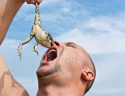 Productief zijn - iedereen wil het, slechts weinigen kunnen zich er echt toe zetten. Het eten van de spreekwoordelijke kikker gaat niet iedereen even goed af. Productiviteitsgoeroe Brian Tracy geeft 8 tips voor de maaltijd.