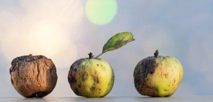 Rotte appels