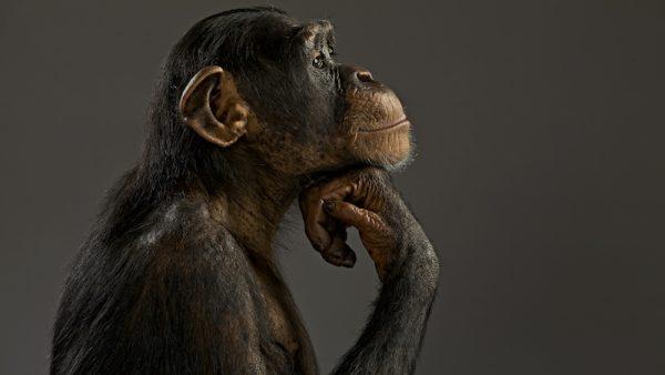 In zijn boek Verliefd op je klant stelt bioloog Patrick van Veen dat we best wat meer voorbeeld mogen nemen aan het dierenrijk als het gaat om klantrelaties. Wat kunnen we van welke dieren leren? Definieer de relatie 'Weet wat voor relatie het is voordat je hem aangaat. Als je een gorilla bent, dan moet je iemand ook als een gorilla verleiden. Zien zij een vrouw die ze willen verleiden, dan stappen ze erop af en geven haar een flinke klap. Doet een chimpansee dat bij een vrouwtje, dan krijgt hij een klap terug. Die moet meer in de weer met smakkende lippen en uitgestrekte armen. Verleiden is maatwerk, waarbij gekeken moet worden naar verwachtingen.' Vlooi 'Berberapen besteden vaak wel twee uur per dag om elkaar te vlooien. Het gaat hierbij om het opbouwen van een relatie. De structuur van de groep is vrij complex, dus het is belangrijk om de relaties op te blijven bouwen. Dagelijks wordt deze relatie onderhouden: van het urenlang vlooien tot het kort in elkaars vacht kriebelen. Tijdens het verleiden is imponeren belangrijk, maar daarna komt de fase van onderhoud. Het zijn juist die kleine rituelen die relaties in stand houden.' Leg contact 'Honden lopen nooit langs elkaar zonder elkaar te begroeten. Soms snuffelen ze even aan elkaar achterwerk, op andere momenten blaffen ze, maar er is altijd een contactmoment. Ook non-verbaal staan ze altijd open voor signalen. Belangrijk, want wie een relatie aan wil gaan moet alert zijn op signalen van anderen.' Wees aantrekkelijk 'Pauwen moeten er continu tiptop uitzien om hun partner te imponeren en de concurrentie te laten zien dat zij het meest begeerlijk zijn. Aan de vacht of veren van een dier kun je opmaken hoe gezond ze zijn. Verdwijnt dat, dan betekent dat vaak dat dieren dood gaan. Pauwen zijn ook continu alert op hun omgeving en het plaatje dat anderen waarnemen. Zodra er een willekeurige andere vogel in de buurt komt, demonstreert de pauw zijn beste kant.' Onderhoud de relatie 'Dat zwanen in hun leven maar één partner