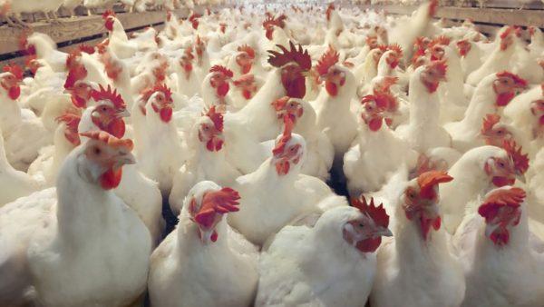 1. Beslag gelegd op huizen bestuurders van eierschandaal-bedrijf Chickfriend Er is beslag gelegd op de woningen van twee bestuurders van Chickfriend, het bedrijf dat zorgde voor het eierschandaal door gif te gebruiken bij pluimvee.Dat meldt het FD. De beslaglegging ging gepaard met huiszoekingen gistermiddag in zowel Nederland als Belgie. De twee bestuurders, Albertus van de B. en Teunis IJ., worden verdacht van het in gevaar brengen van de volkgszondheid en worden momenteel onderzocht door justitie. Ook zijn de panden van een dierenarts en van desinfecteerbedrijven bezocht door de politie. Zij zouden het gif fipronil ook hebben gebruikt. De affaire heeft inmiddels al 150 miljoen euro schade veroorzaakt in de sector. Dit kan volgens het oplopen tot het dubbele bedrag als het consumentenvertrouwen niet snel hersteld wordt. 2. Meer Noord-Koreanen op 'black list' EU De Europese Unie breidt haar sancties tegen Noord-Korea uit. Dat is een reactie op de nieuwe resolutie van de Veiligheidsraad van de VN, waarin de nucleaire dreigingen van Noord-Korea tegen de VS nogmaals scherp veroordeeld worden. De sancties betreffen reisbeperkingen voor inmiddels in totaal 57 bedrijven en 103 personen en het bevriezen van hun tegoeden. De EU heeft laten weten zich grote zorgen te maken over de politieke ruzie tussen Donald Trump en Kim Jong-un. 3. Meteogroup gehackt door Nigerianen Nigeriaanse hackers hebben gisterenmiddag digitaal ingebroken bij Meteogroup Nederland, het bedrijf achter Weer.nl. Dat meldt RTL Z. Het is een serieuze inbraak, want alle inloggevens en eventueel zelfs bankrekeningen van het bedrijf zijn nu gegijzeld. De hackers kwamen via een professioneel uitziende phishingmail met malware binnen in het systeem, via een salesmanager die de bijlage opende. Meteogroup heeft inmiddels actie ondernomen, het is nog niet bekend hoe groot de schade is.  4. GGZ-sector heeft groot tekort aan verpleegkundigen Er is een tekort aan onder andere verpleegkundigen in de geestelijke gezon