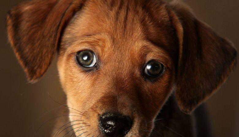 'Kristel, wil je even naar boven komen? Je hond heeft net recht onder mijn bureau gekakt', hoor ik. 'Ja, leuk hoor Mark. Zeker een verlate 1 april grap', en ik leg de hoorn van de telefoon weer neer. Binnen twee minuten belt mijn huurder van een van onze kantoren boos terug: 'Kristel, ik ga dit echt niet zelf opruimen. Het kan wel de hond van de directeur zijn, maar zelfs haar kak stinkt.' 'Het is al goed, ik kom eraan', antwoord ik. Het positieve effect van de kantoorhond Een hond op kantoor, een teken van onprofessionaliteit? Of gewoon een nieuwe hype in managementland? Dit voorval was heel gênant, maar ik moet wel toegeven dat we er vreselijk om gelachen hebben. Een hond op de zaak is zeker een sfeermaker en dan hoeft ze niet eens op een ongepaste plek gekakt te hebben. Een aantal van onze systeemplafondplaten zijn gesneuveld door een potje voetbal met mijn hond Luna. Af en toe pikt ze weleens een boterham van een medewerker of zit ze met haar kop in de cappuccino van een klant. 'Sorry meneer, maar Luna lust graag koffie. Bier trouwens ook.' En iedereen moet weer lachen. Een Amerikaans onderzoek van de Virginia Commonwealth University heeft aangetoond dat een kantoorhond een positief effect heeft op de perceptie van stress. Een onderzoek van de psycholoog Stephen Colarelli van de Central Michigan University heeft bewezen dat een hond de vertrouwensrelatie tussen teamleden verhoogt. Een hond op kantoor bevordert de collegialiteit. Andere wetenschappers beweren zelfs dat een hond op de werkvloer de arbeidsproductiviteit verhoogd en een positief effect heeft op de beleving van zowel klanten als medewerkers. Heb je een winkel, dan is het aan te raden om je hond mee te nemen. Dit zou je omzet doen stijgen. Eigenlijk zou ieder modern bedrijf gewoon een hond op kantoor moeten hebben. Wees lief voor de hond van de baas De hond van de directeur is belangrijker dan je denkt. Hij of zij is de beste vriend van je leidinggevende. De volgende opmerkingen zijn heel gevaarlijk: 