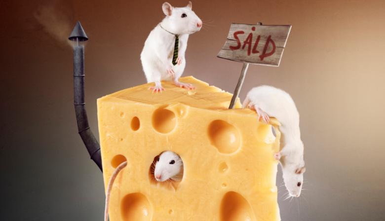 leider als rat