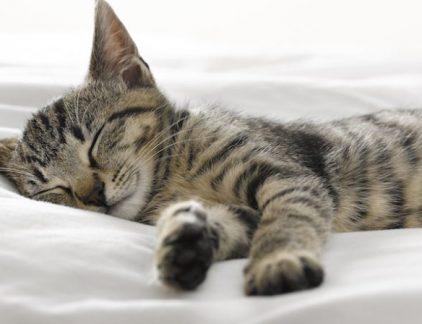 Lange tijd was lang doorwerken en weinig slaap een soort statussymbool maar uit onderzoek blijkt dat wie aan de top wil komen maar beter zijn uren kan maken.
