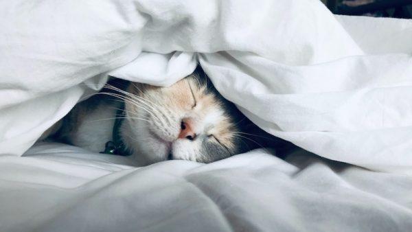 Slaap onrustige tijden