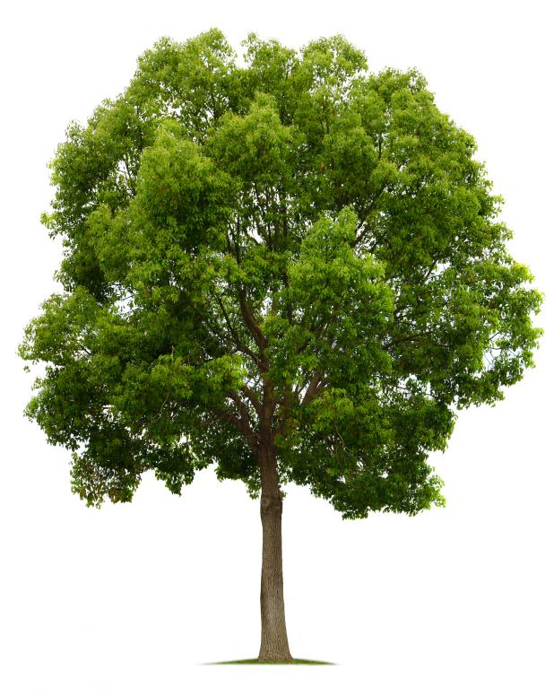 Hoe je van een blije eikel kunt veranderen in een bloeiende boom - Hoe een boom te verlichten ...